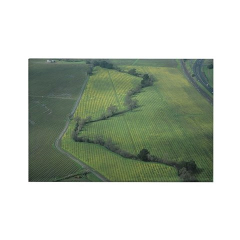 Bare wine vines with highway, aer Rectangle Magnet