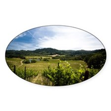 Vineyard in Sonoma Valley, Californ Decal