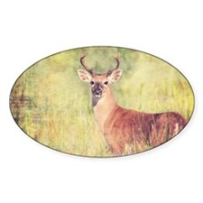 White Tailed Buck Decal
