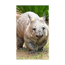 Common wombat - vombatus ursin Decal