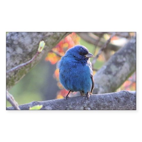 Indigo Bunting Decal
