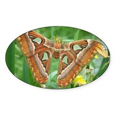 Moth Decal