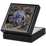 Sea Gull Chick Keepsake Box