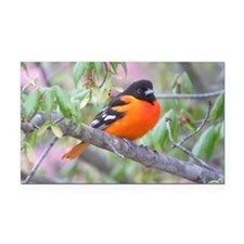 Baltimore Oriole Rectangle Car Magnet