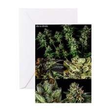 Master Kush Poster Greeting Card