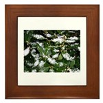 Snow Plant Framed Tile