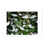 Snow Plant Postcards (Package of 8)