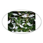 Snow Plant Oval Sticker