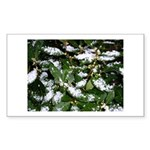 Snow Plant Rectangle Sticker