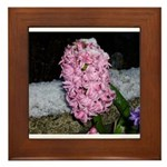 Snow Hyacinth Framed Tile
