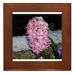 Snow Hyacinth Framed Tile