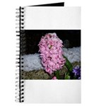 Snow Hyacinth Journal