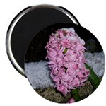 Snow Hyacinth Magnet