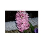 Snow Hyacinth Rectangle Magnet