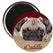 Adorable iCuddle Pug Puppy Magnet