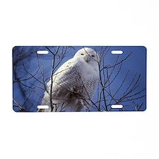 Snowy White Owl, Blue Sky Aluminum License Plate