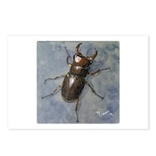 Lucanus Capeolus Postcards (Package Of 8)