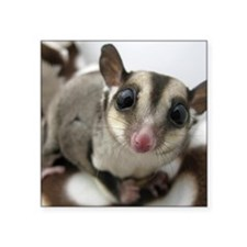"Sugar Glider Love Square Sticker 3"" x 3"""