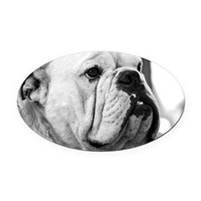 Bull dog Oval Car Magnet
