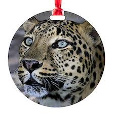 Jett 3B Ornament