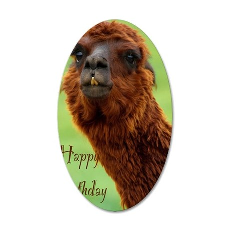 funny alpaca birthday 35x21 Oval Wall Decal