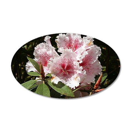 Rhododendron flower in bloom 20x12 Oval Wall Decal
