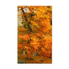 Willow in Autumn colors Rectangle Car Magnet