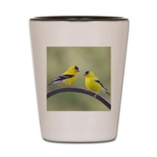 Gold Finches Shot Glass