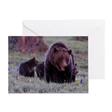 Grizzly Bear 399  Cubs Greeting Card