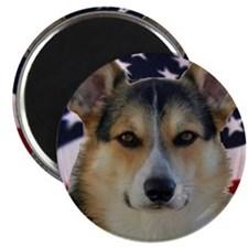 Corgi with American Flag Magnet