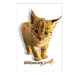 SOS Lynx Postcards (8)