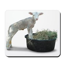 Ewephoric Dorset Lamb in a Tub Mousepad