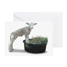 Ewephoric Dorset Lamb in a Tub Greeting Card