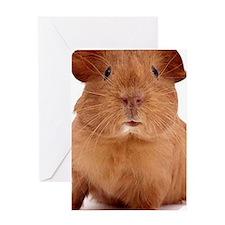 guinea pig face Greeting Card