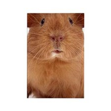 guinea pig face Rectangle Magnet