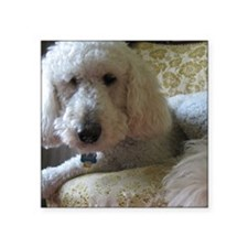 "Goldendoodle Square Sticker 3"" x 3"""