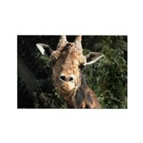 Helaine's Smiling Giraffe Rectangle Magnet