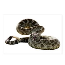 Rattlesnake Photo Postcards (Package of 8)