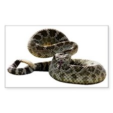 Rattlesnake Photo Rectangle Decal