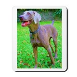 Weimaraner on Ready Mousepad