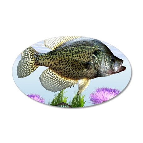 Crappie 35x21 Oval Wall Decal