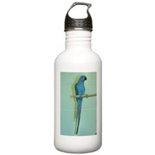 Indian Ringneck Blue Water Bottle