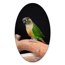greencheek conure Decal