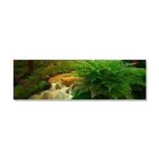 Stream in the forest Car Magnet 10 x 3