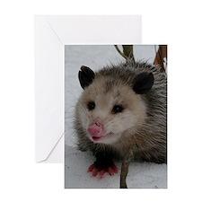 Snow Possum Greeting Card