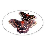 Cercropia Moth Oval Decal