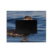 Horned Grebe Picture Frame