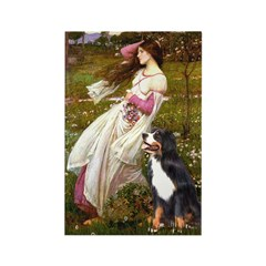 Windflowers & Bernese Rectangle Magnet