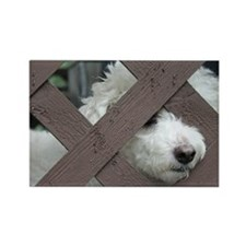 bichon Rectangle Magnet