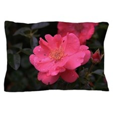 Pink Rose with water droplets Pillow Case